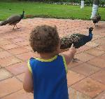 Admiring the peacocks at the resort